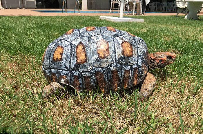 shell 3d printed for injured tortoise