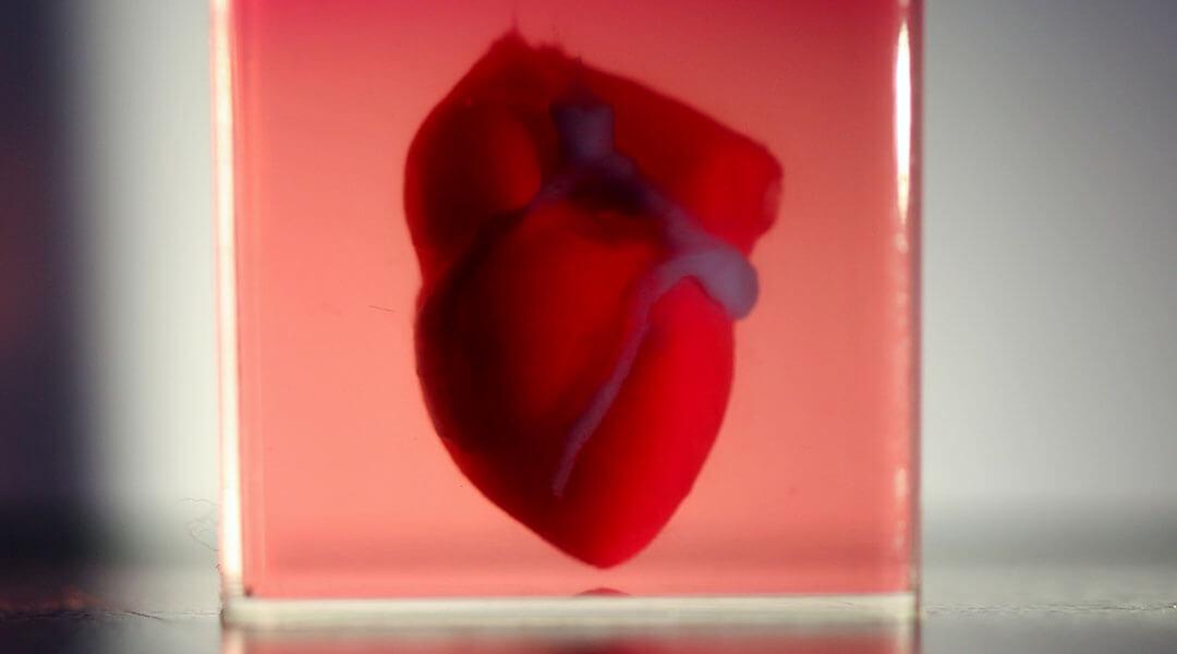 3d printed heart